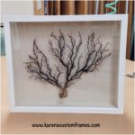 Sea Fan Shadow Box | Custom Design and Framing by Karen's Detail Custom Frames