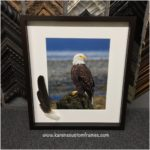 Bald Eagle Photo with Feather | Custom Design and Framing by Karen's Detail Custom Frames, Orange County CA